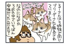 ノルウェージャンフォレストキャットの価格考察【猫漫画傑作選】