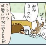 【猫漫画傑作選】ノルウェージャンに占拠される男