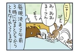 【猫漫画傑作選】ノルウェージャン+チンチラ連合軍、飼い主の布団でコントをする
