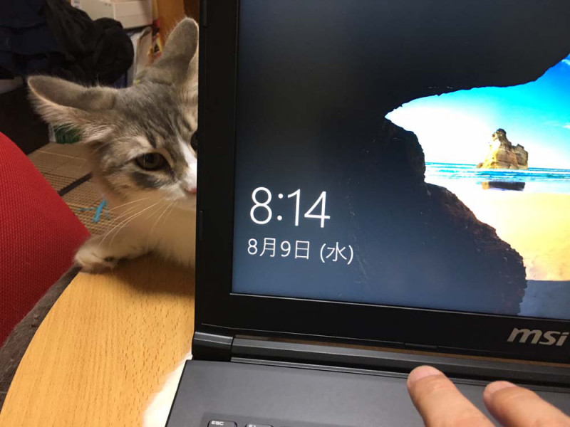 なぜネコは、仕事の邪魔をするのか?