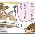 【猫漫画傑作選】ノルウェージャン、薄い髪の毛を引っこ抜く