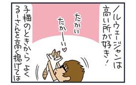 【猫漫画傑作選】四十肩vs.ノルウェージャン! その後……