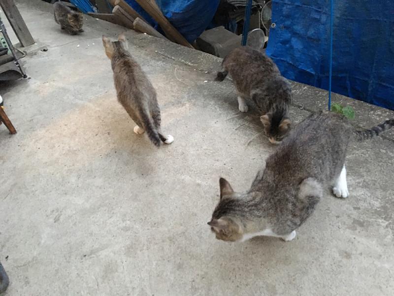 実家のネコ事情