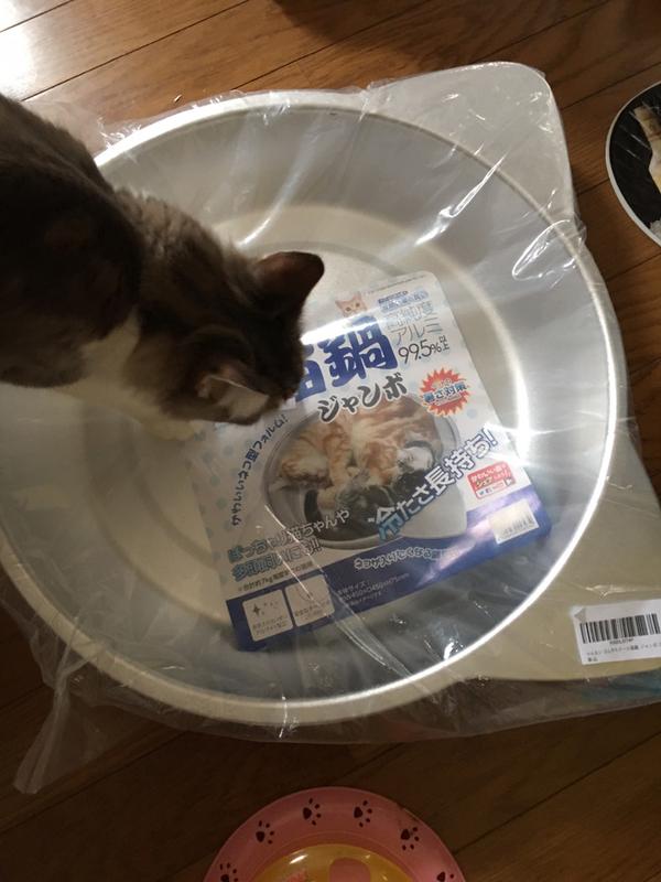 ネコ鍋奉行
