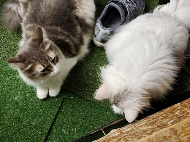 猫のミーティング
