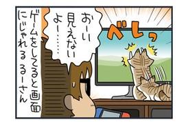 ノルウェージャンとペルシャ、ゲームを妨害する【猫漫画傑作選】