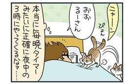 """【猫漫画傑作選】ノルウェージャン+チンチラ連合軍、飼い主を""""臭爆""""す"""
