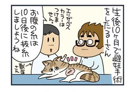 【ねこまんが】抜糸