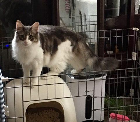 泥棒ネコ、犯行現場を見られて逆ギレする