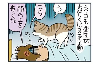 ノルウェージャン、飼い主の腹で足を踏み外す【猫漫画傑作選】