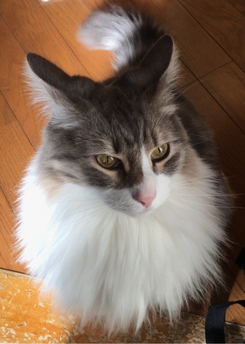 """猫のおやつを人間がレビューする~ちゅ~る""""まぐろ""""【改訂版】"""