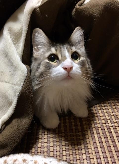 猫のおやつを人間がレビューする~やわらか仕上げカニ(入り)かま~【改訂版】