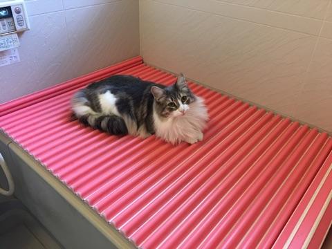 ネコ用床暖房?