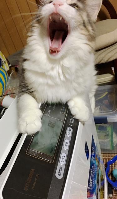 猫の抜け毛対策! 空気清浄機は大騒ぎ(2)