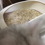 猫のトイレを徹底解説(1)猫砂トイレとシステムトイレはどちらがいい? 自動洗浄もあるの!?