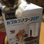"""猫の""""自動給餌機""""徹底比較!"""