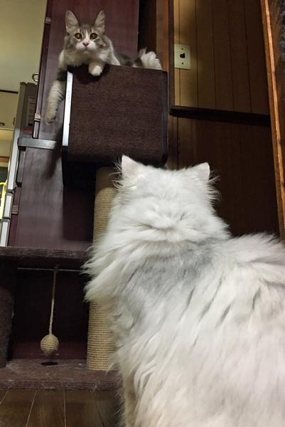 猫、多頭飼い時の注意点(4)