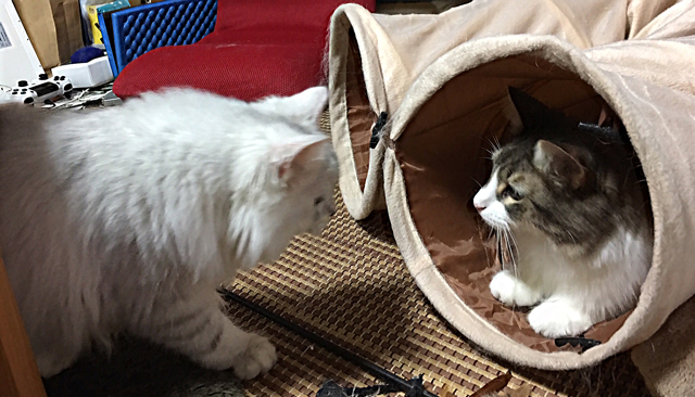 猫、多頭飼い時の注意点(5)
