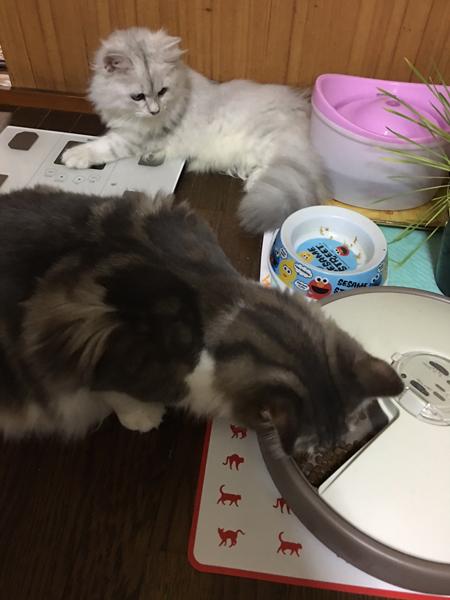 猫、多頭飼い時の注意点(その3)