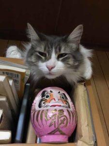 猫がドライフードを食べない!?飽きたときの対策、対処法