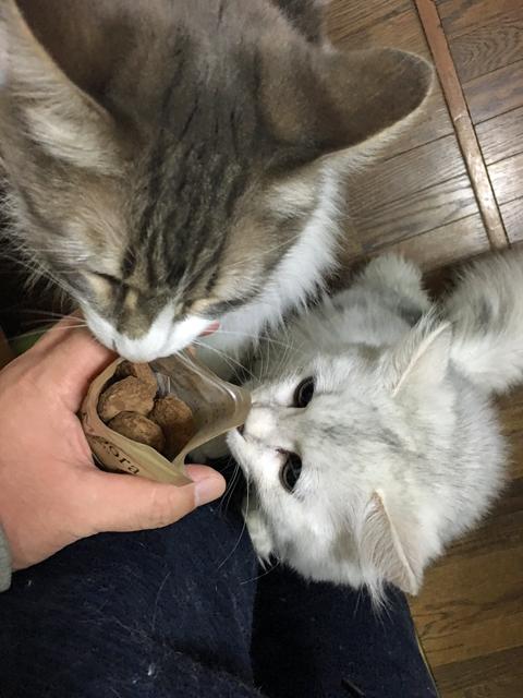 猫のおやつを人間がレビューする・エミューの肉
