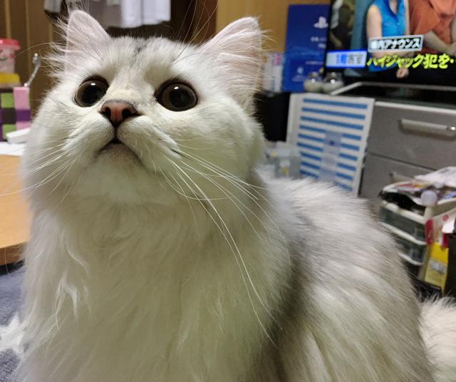 """猫のトイレを徹底解説(3) 必ず出てくる""""臭い""""問題、対策と軽減方法"""