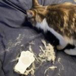必見! 布団についた猫毛の取り方、対策教えます!