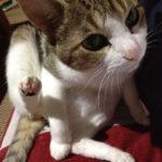 【猫エッセイ】猫とかまぼこの思い出