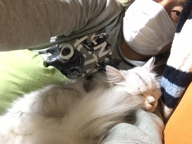 【猫エッセイ】マスクマン、チンチラペルシャを警戒させる