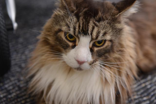 【ロイヤルカナンインタビュー(3)】「猫は味をほとんど感じていません。だったら……」