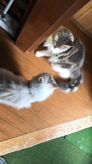 睨み合う2匹
