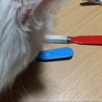 猫用爪切り大研究!そのとき、ノルウェージャンとペルシャは……