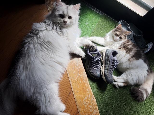 ダラける猫たち1