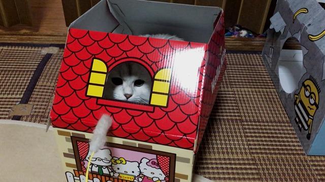 キティちゃん×ノルウェージャン×ペルシャの攻防w