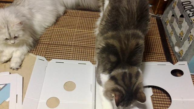 邪魔する猫3
