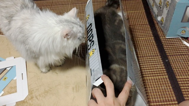 邪魔する猫4