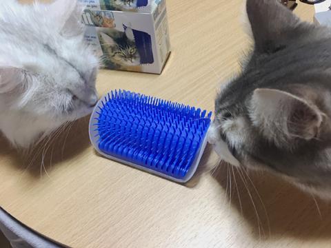 猫が自分でブラッシング?画期的ブラシ試した【ノルウェージャン】
