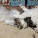 2匹の猫はナゼ揉める?プロレスの発端撮った【ノルウェージャン】