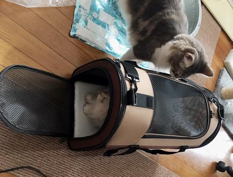 おすすめ猫用キャリーバッグ!セミハードタイプの使い心地は?