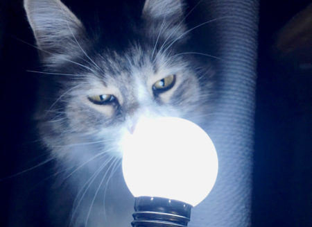 【猫動画】闇夜に浮かぶ進撃のノルウェージャンとペルシャ猫w