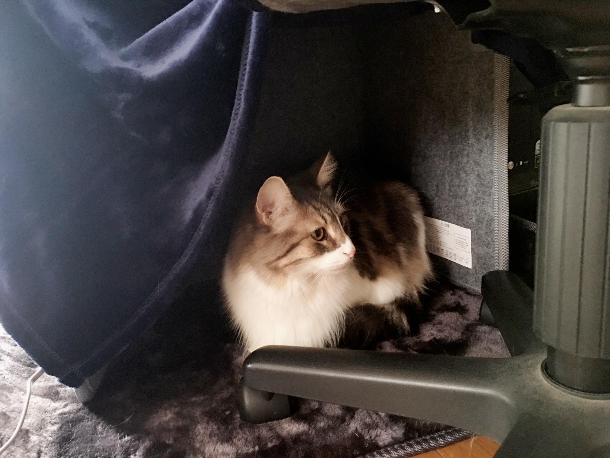猫の寒さ対策? パネルヒーターを導入しました!